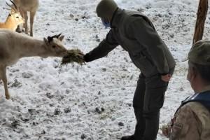 Jandarma geyikleri eliyle besledi