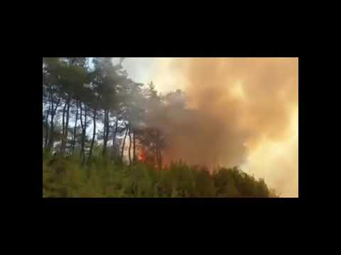 Son Dakika Kahramanmaraş Andırın Orman Yangını Felaketi